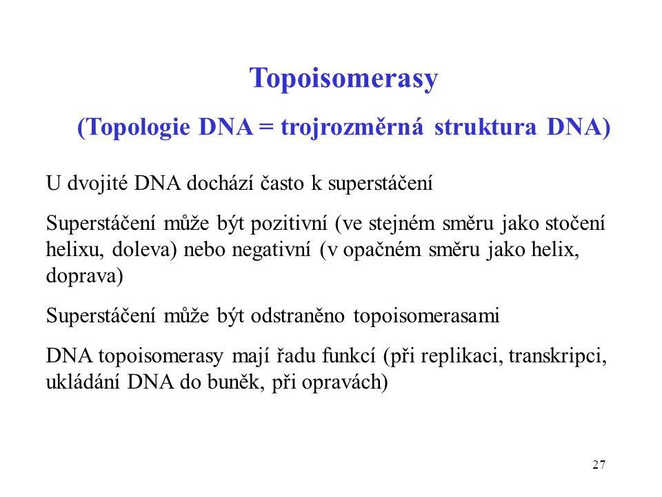 (Topologie DNA = trojrozměrná struktura DNA)
