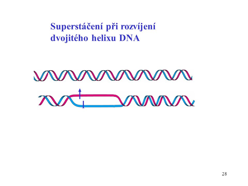 Superstáčení při rozvíjení dvojitého helixu DNA