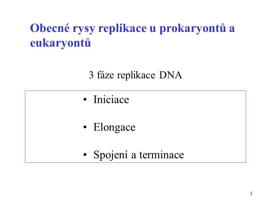 Obecné rysy replikace u prokaryontů a eukaryontů