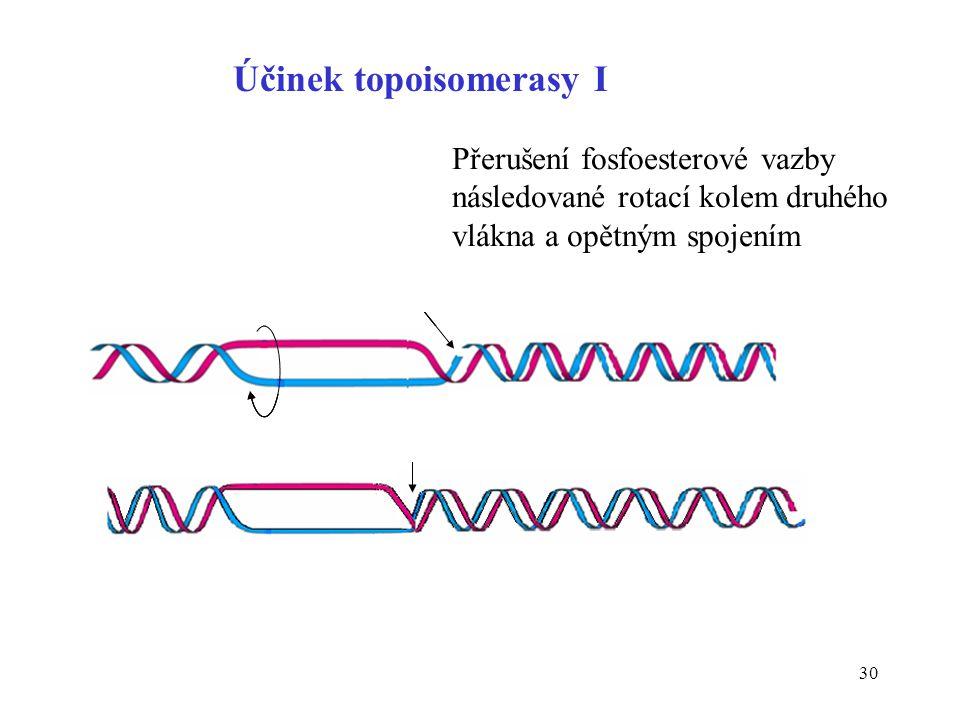Účinek topoisomerasy I