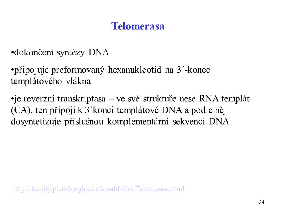 Telomerasa dokončení syntézy DNA