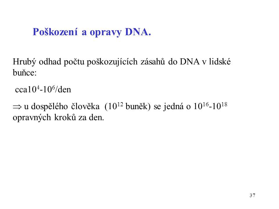 Poškození a opravy DNA. Hrubý odhad počtu poškozujících zásahů do DNA v lidské buňce: cca104-106/den.