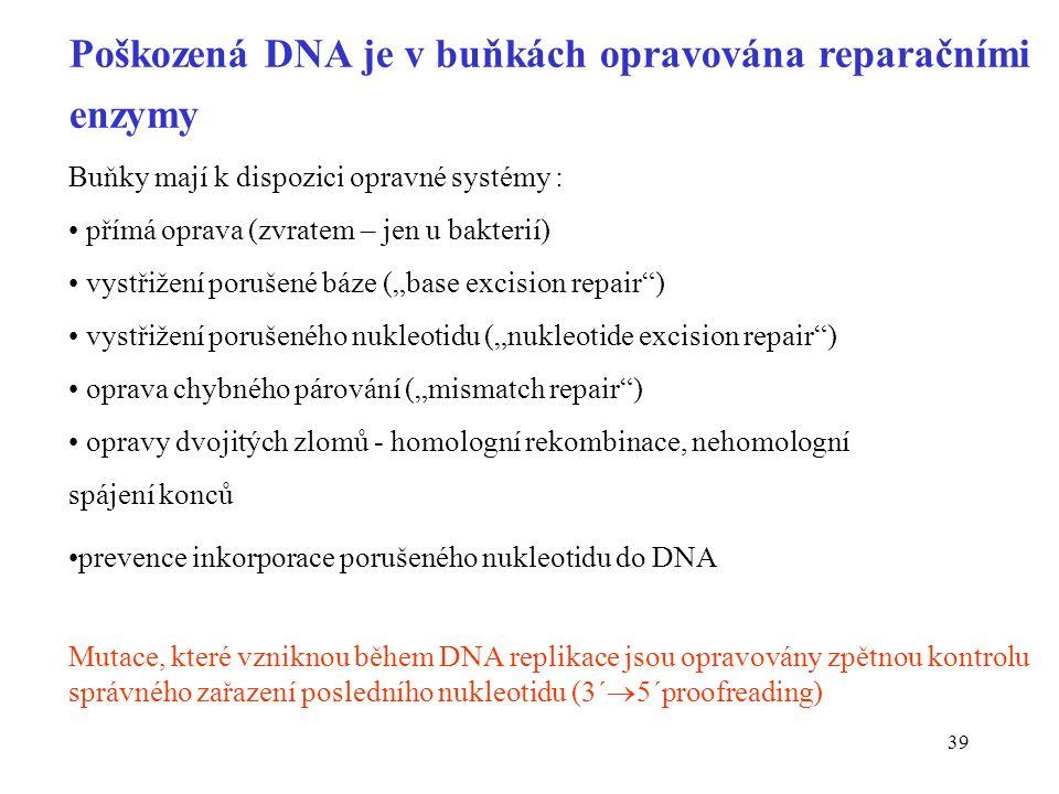 Poškozená DNA je v buňkách opravována reparačními enzymy