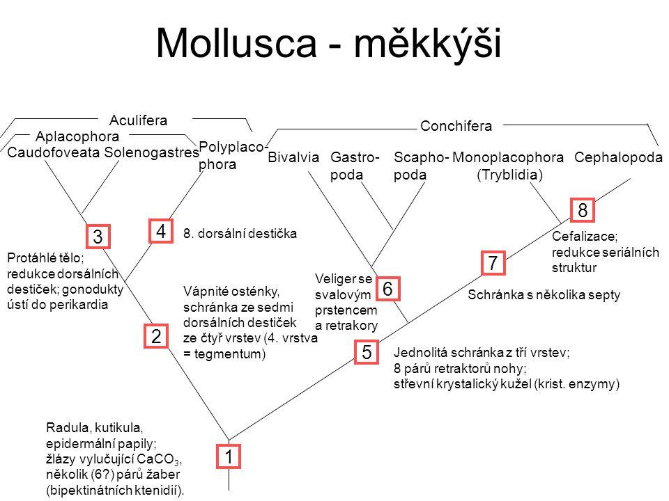 Monoplacophora (Tryblidia)