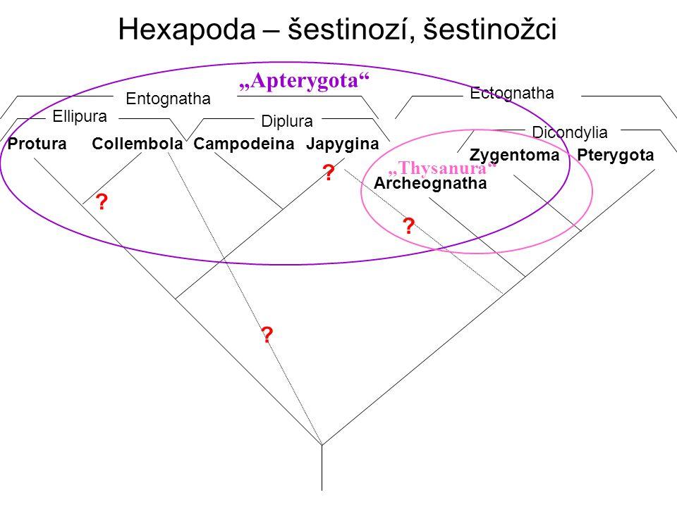 Hexapoda – šestinozí, šestinožci