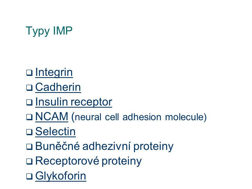 Typy IMP Integrin. Cadherin. Insulin receptor. NCAM (neural cell adhesion molecule) Selectin. Buněčné adhezivní proteiny.