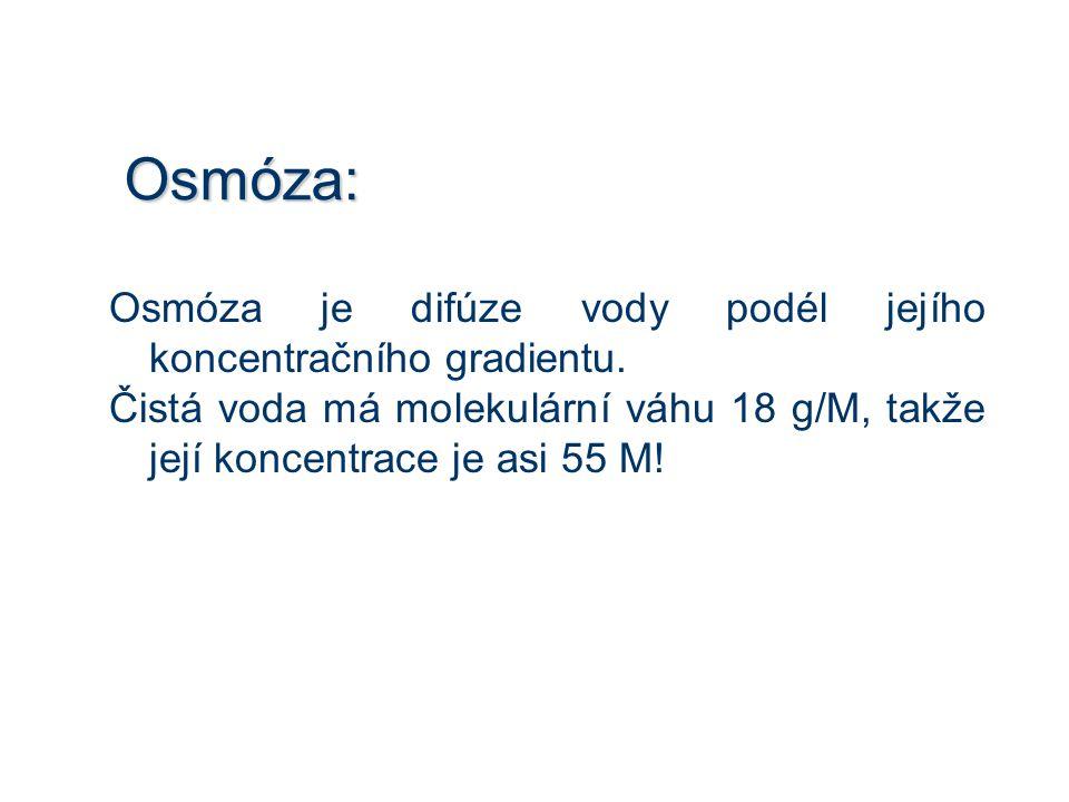 Osmóza: Osmóza je difúze vody podél jejího koncentračního gradientu.