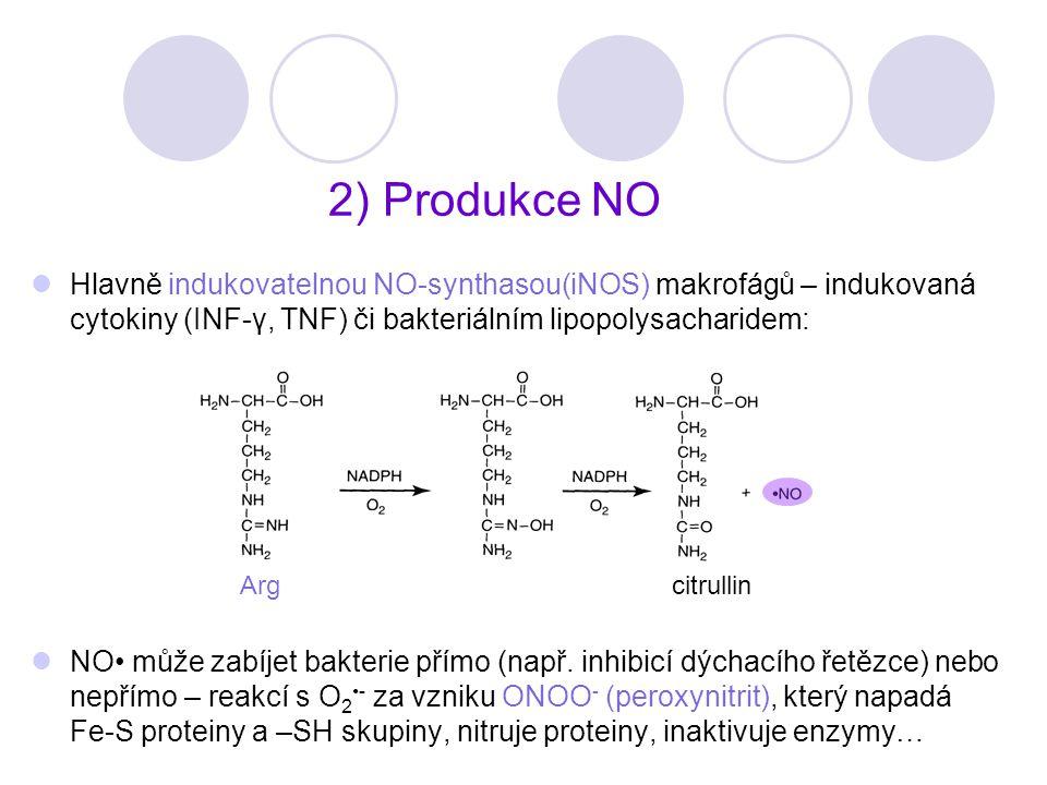 2) Produkce NO Hlavně indukovatelnou NO-synthasou(iNOS) makrofágů – indukovaná cytokiny (INF-γ, TNF) či bakteriálním lipopolysacharidem: