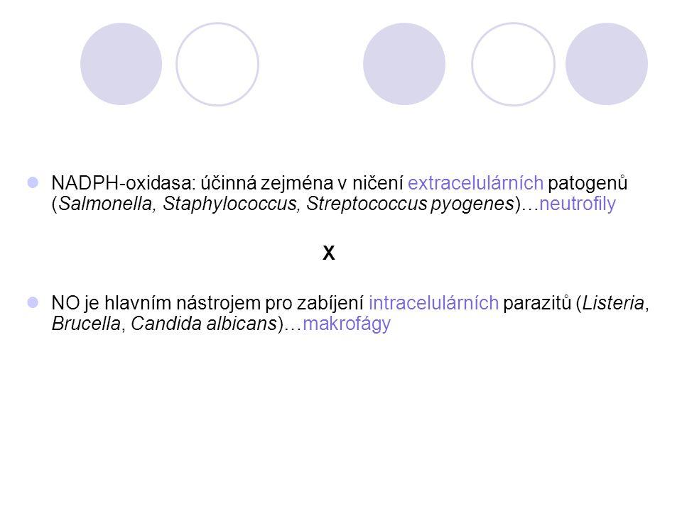 NADPH-oxidasa: účinná zejména v ničení extracelulárních patogenů (Salmonella, Staphylococcus, Streptococcus pyogenes)…neutrofily