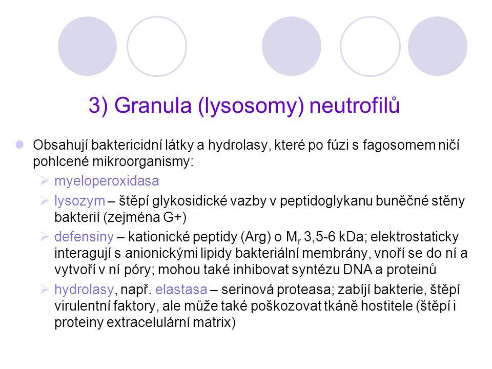 3) Granula (lysosomy) neutrofilů