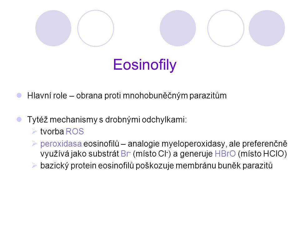Eosinofily Hlavní role – obrana proti mnohobuněčným parazitům