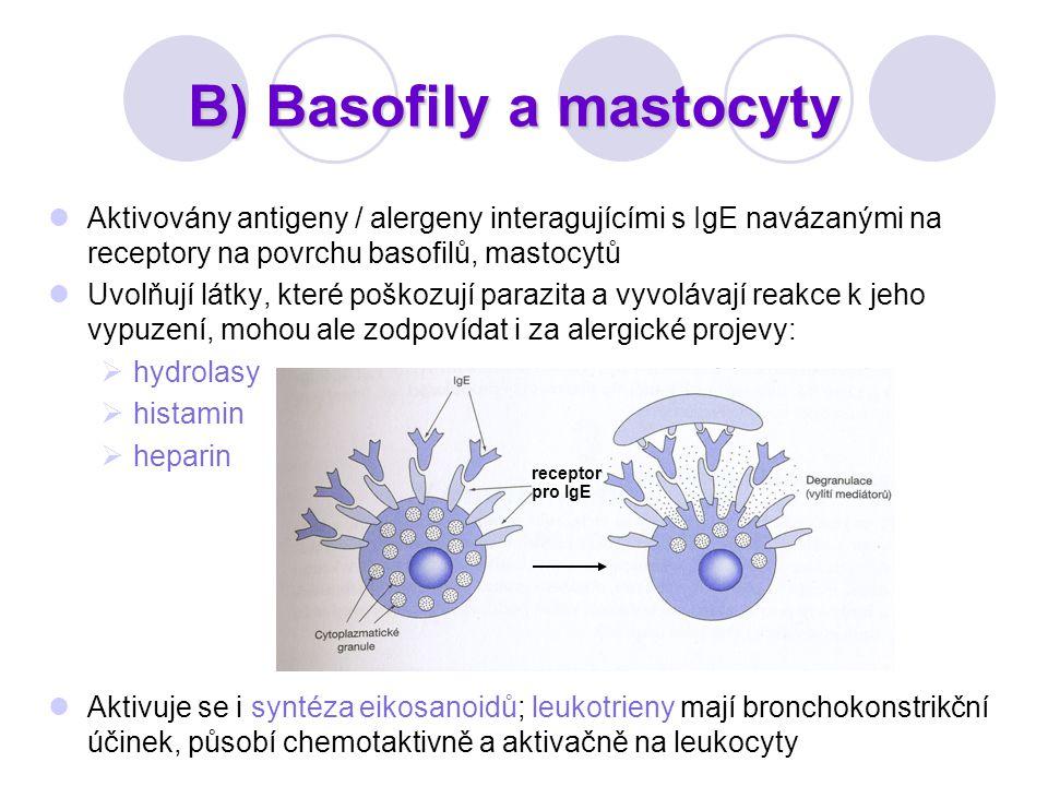 B) Basofily a mastocyty