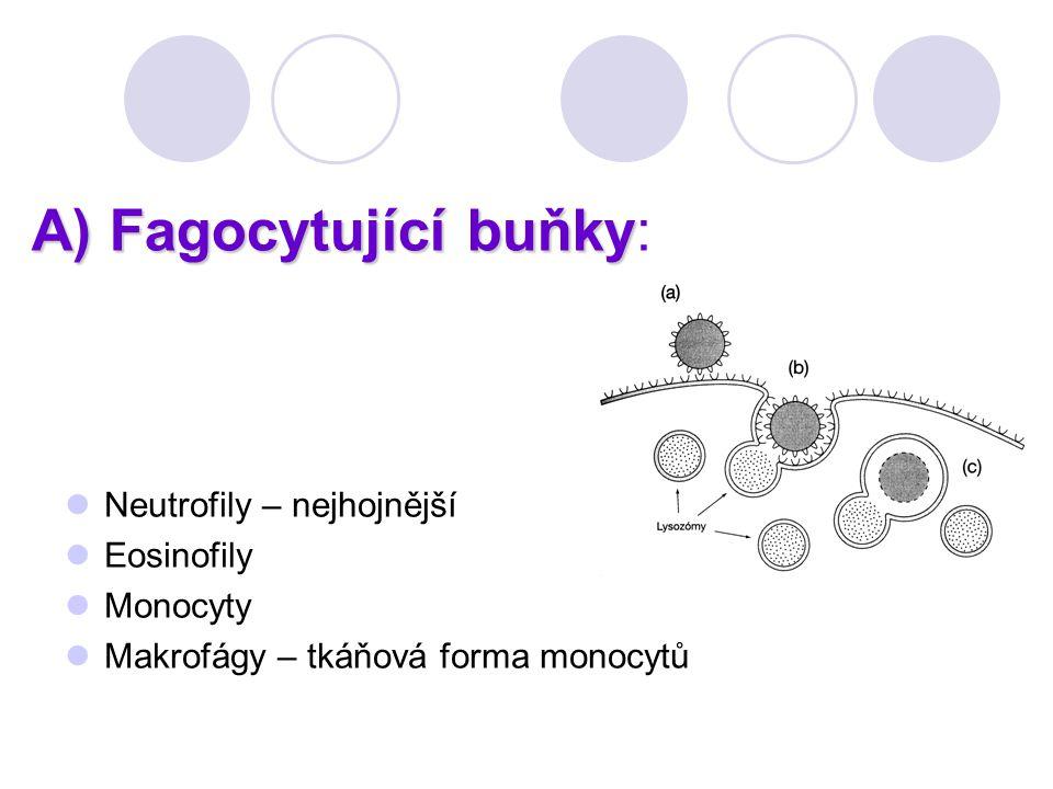 A) Fagocytující buňky: