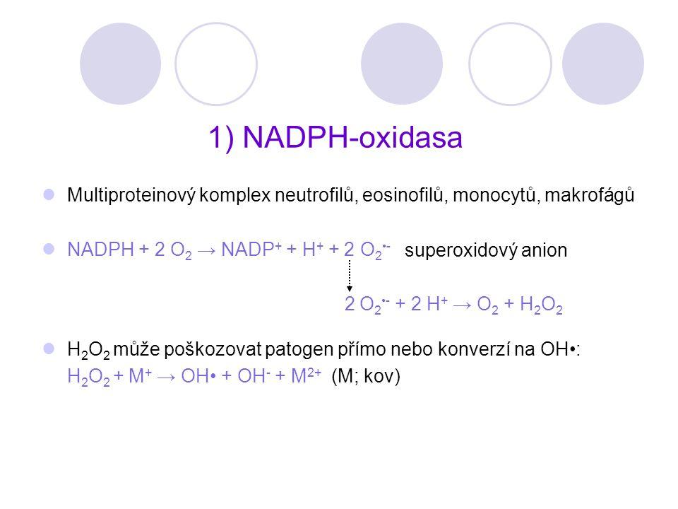 1) NADPH-oxidasa Multiproteinový komplex neutrofilů, eosinofilů, monocytů, makrofágů. NADPH + 2 O2 → NADP+ + H+ + 2 O2•-
