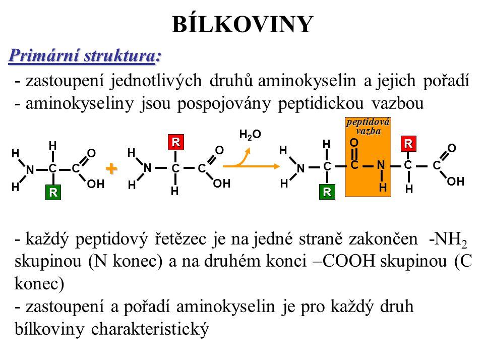 BÍLKOVINY + Primární struktura: