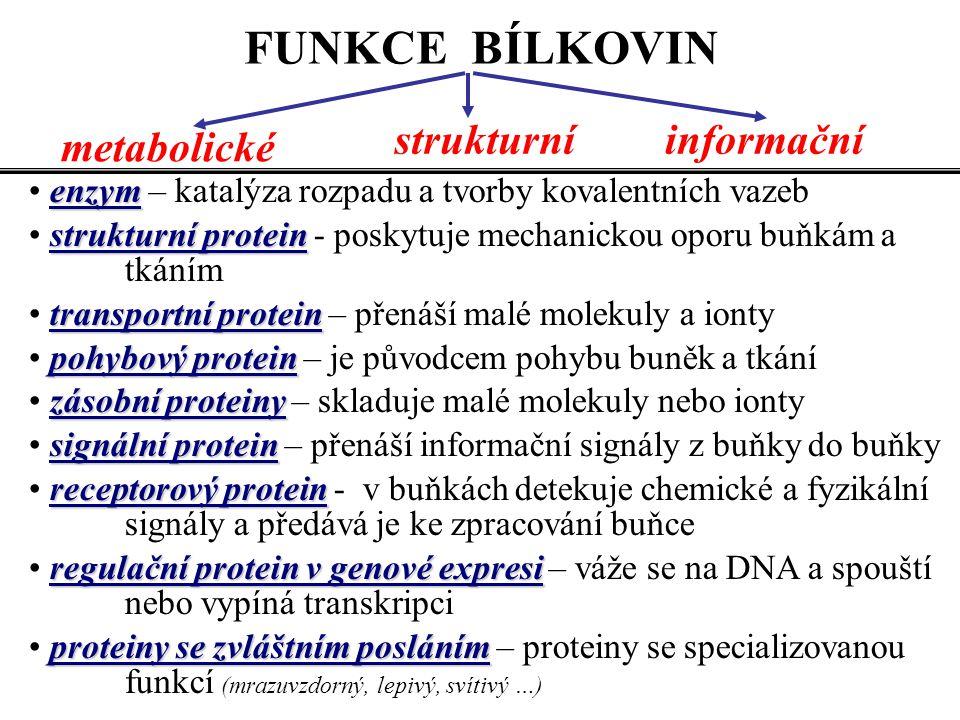 FUNKCE BÍLKOVIN strukturní informační metabolické