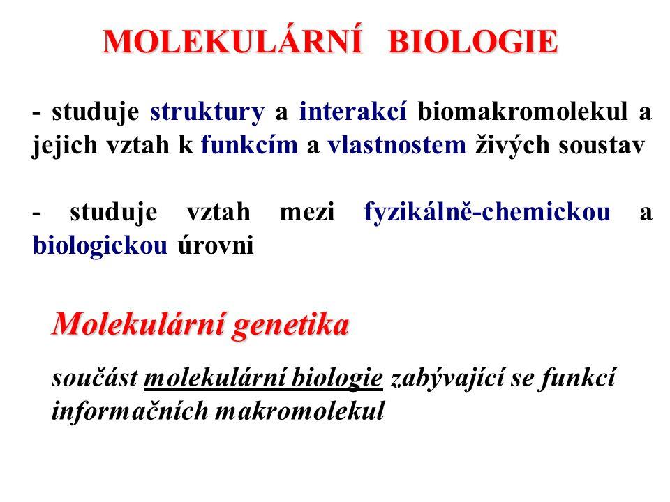 MOLEKULÁRNÍ BIOLOGIE Molekulární genetika
