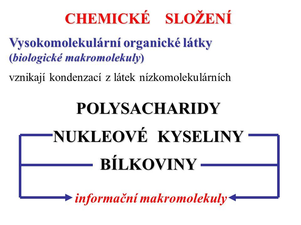 informační makromolekuly