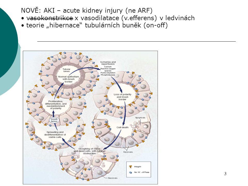 NOVĚ: AKI – acute kidney injury (ne ARF)