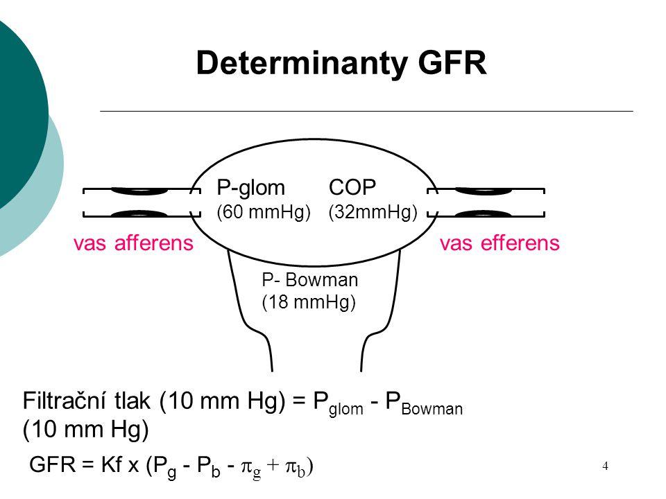 Determinanty GFR Filtrační tlak (10 mm Hg) = Pglom - PBowman