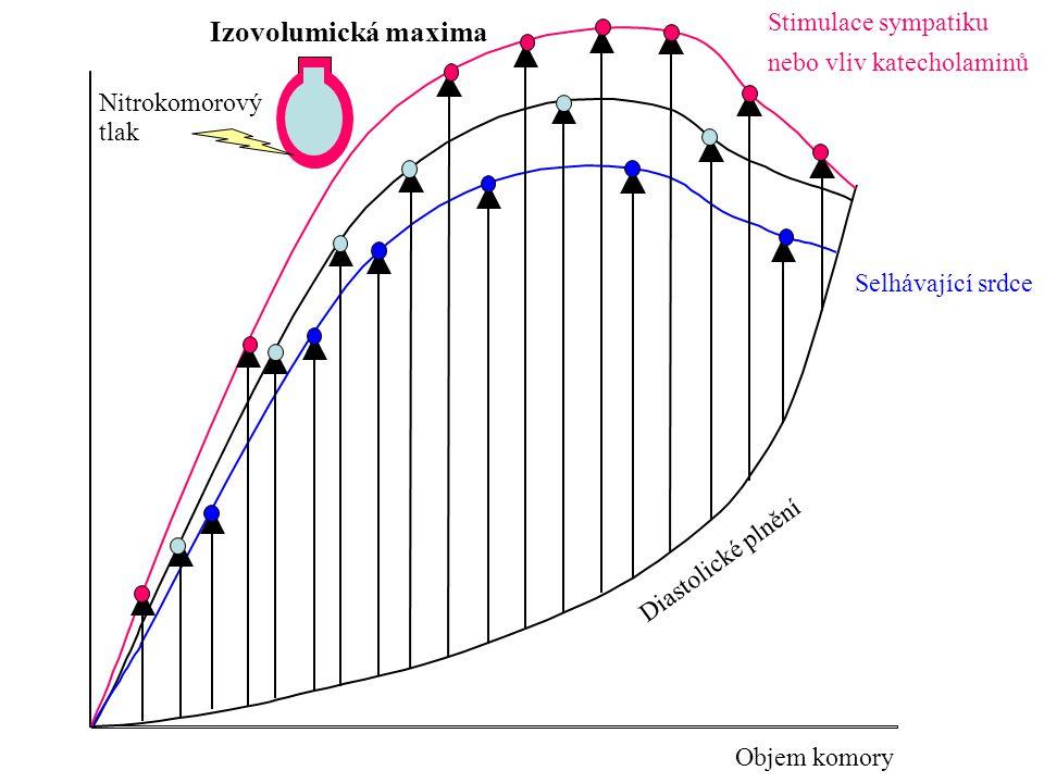 Izovolumická maxima Stimulace sympatiku nebo vliv katecholaminů