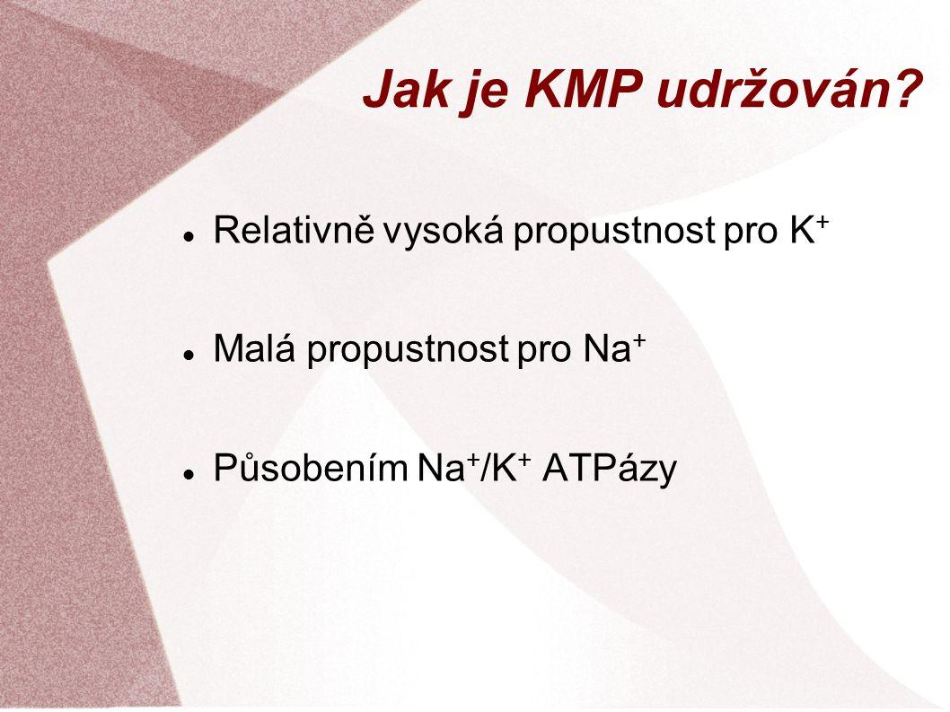 Jak je KMP udržován Relativně vysoká propustnost pro K+