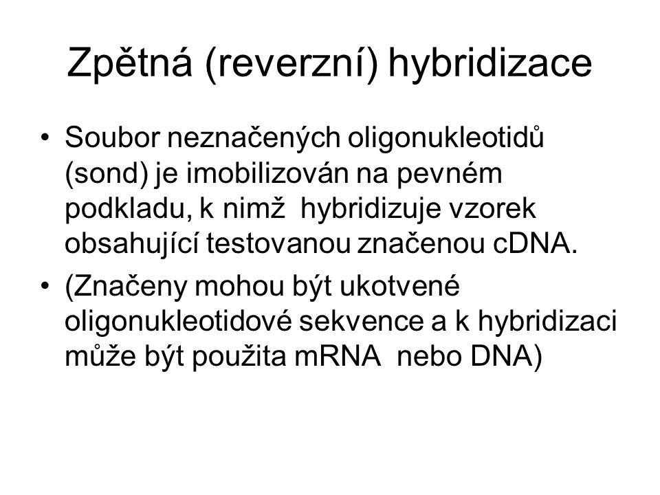 Zpětná (reverzní) hybridizace