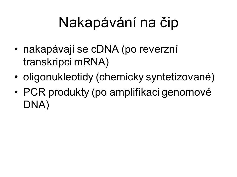 Nakapávání na čip nakapávají se cDNA (po reverzní transkripci mRNA)