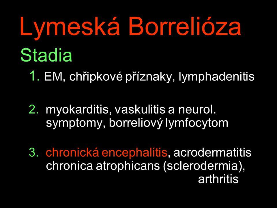 Lymeská Borrelióza Stadia 1. EM, chřipkové příznaky, lymphadenitis