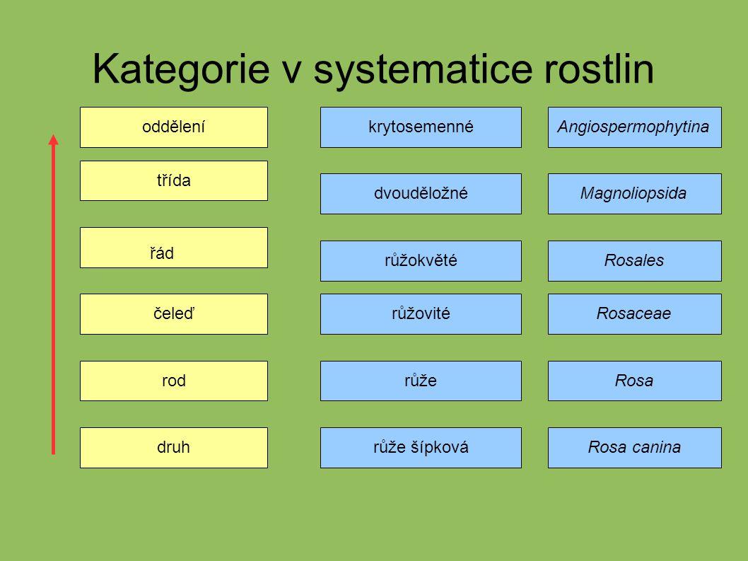 Kategorie v systematice rostlin
