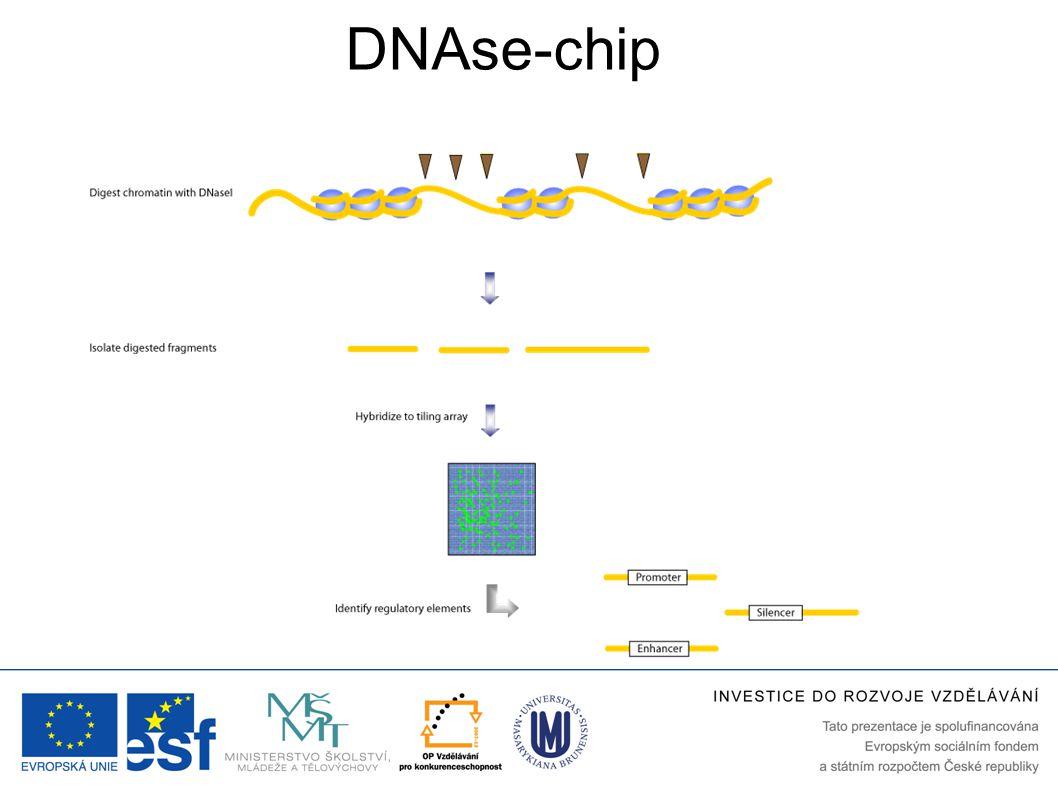 DNAse-chip
