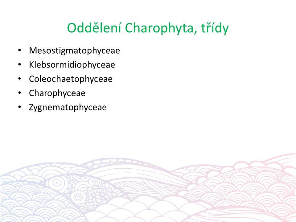 Oddělení Charophyta, třídy
