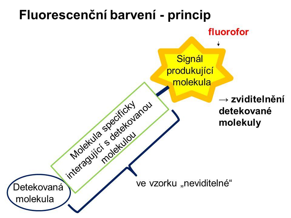Fluorescenční barvení - princip