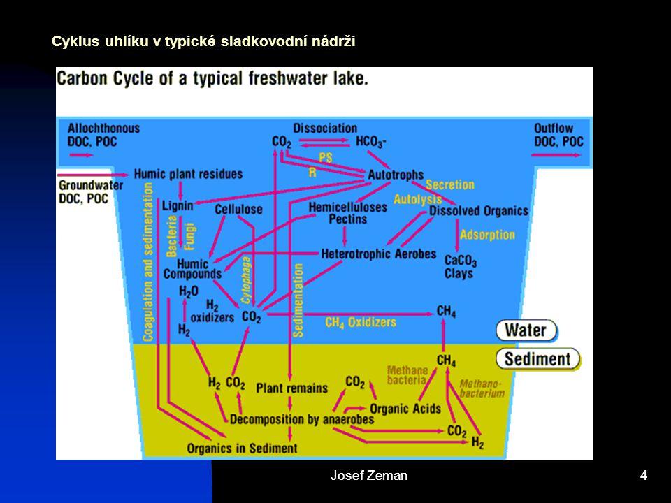 Cyklus uhlíku v typické sladkovodní nádrži
