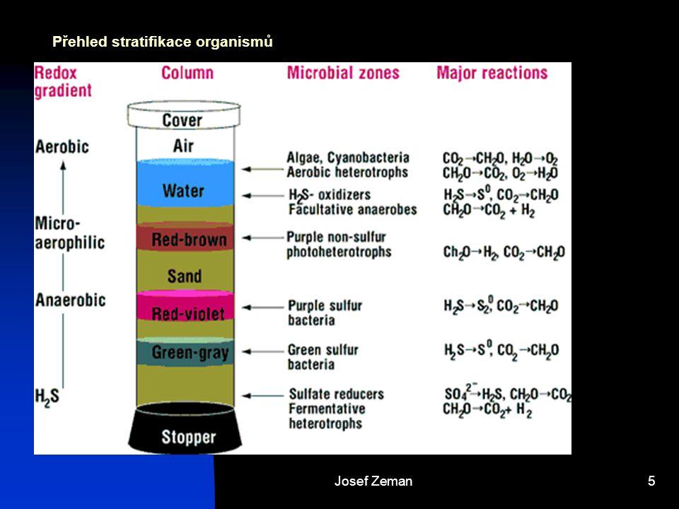 Přehled stratifikace organismů