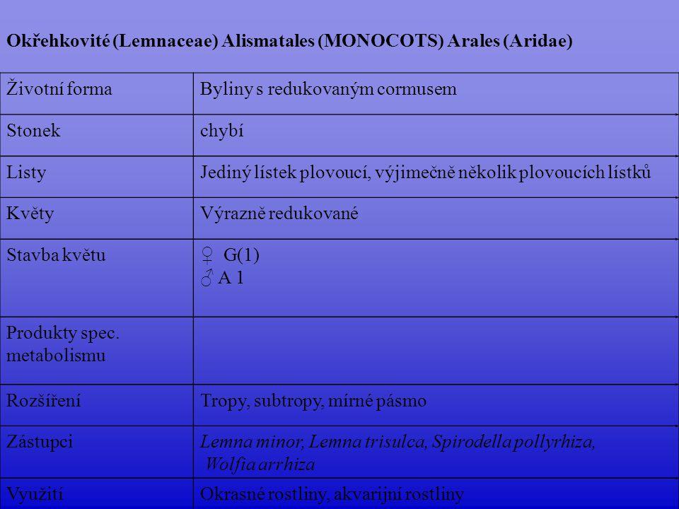 Okřehkovité (Lemnaceae) Alismatales (MONOCOTS) Arales (Aridae)