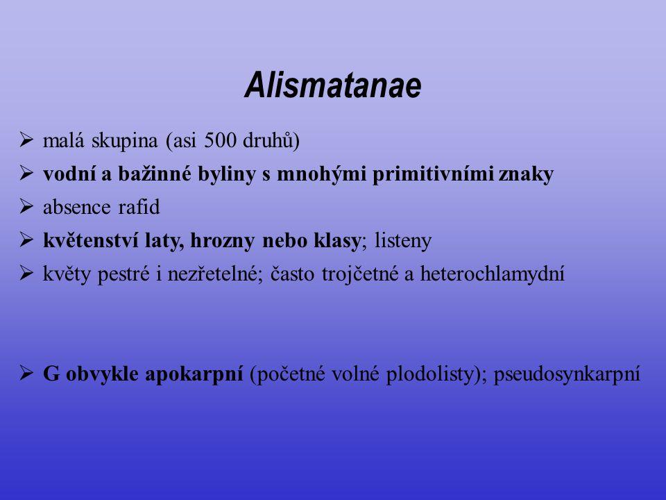 Alismatanae malá skupina (asi 500 druhů)