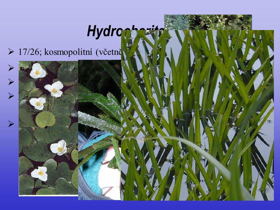 Hydrocharitaceae 17/26; kosmopolitní (včetně moře)