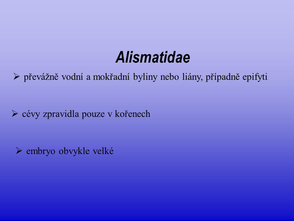 Alismatidae převážně vodní a mokřadní byliny nebo liány, případně epifyti. cévy zpravidla pouze v kořenech.
