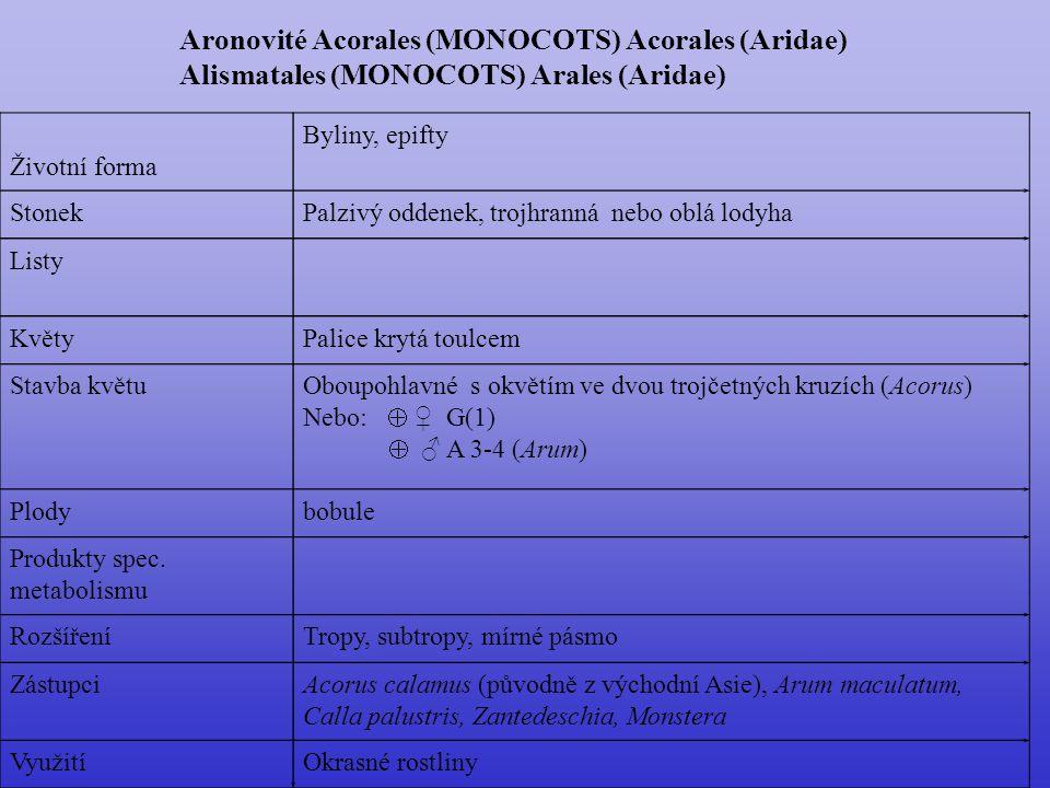 Aronovité Acorales (MONOCOTS) Acorales (Aridae)