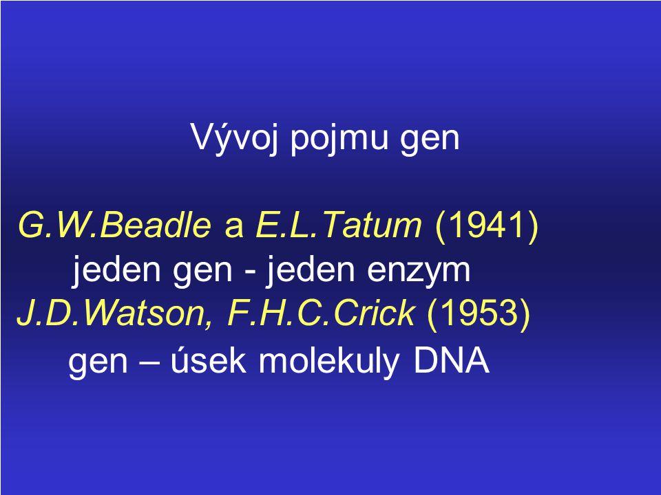 Vývoj pojmu gen G. W. Beadle a E. L. Tatum (1941)
