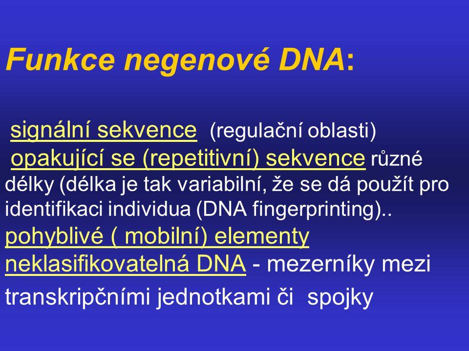 Funkce negenové DNA: signální sekvence (regulační oblasti) opakující se (repetitivní) sekvence různé délky (délka je tak variabilní, že se dá použít pro identifikaci individua (DNA fingerprinting)..