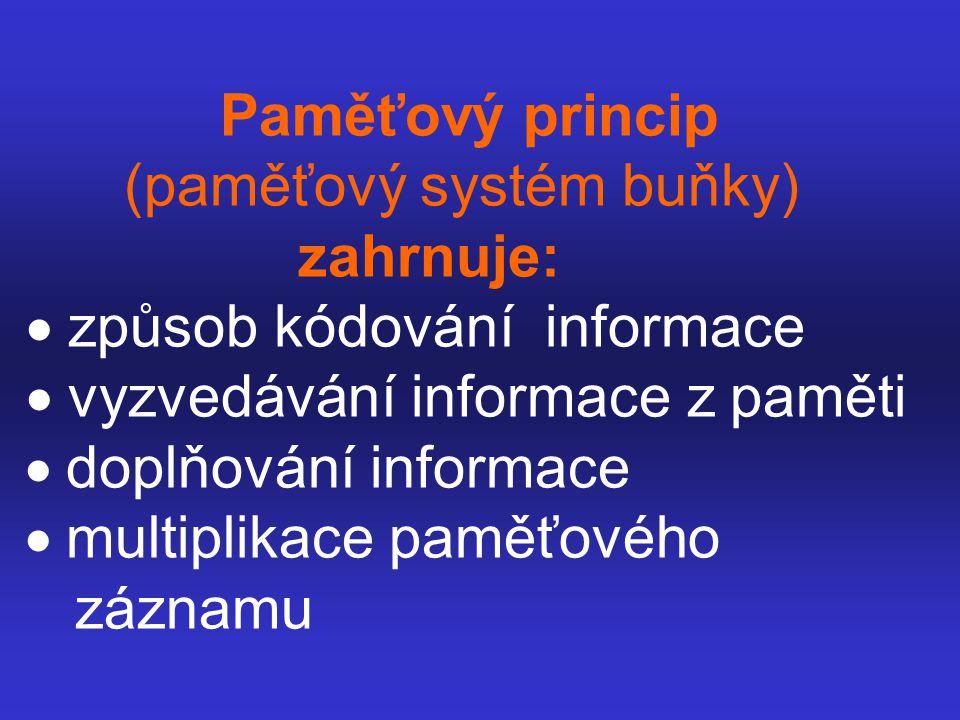 Paměťový princip (paměťový systém buňky)
