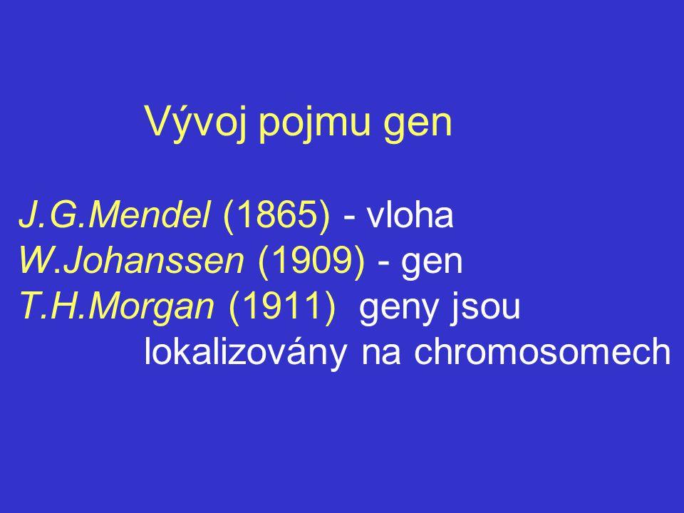 Vývoj pojmu gen J.G.Mendel (1865) - vloha W.Johanssen (1909) - gen T.H.Morgan (1911) geny jsou lokalizovány na chromosomech
