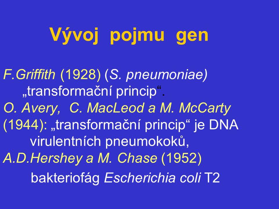 Vývoj pojmu gen F. Griffith (1928) (S