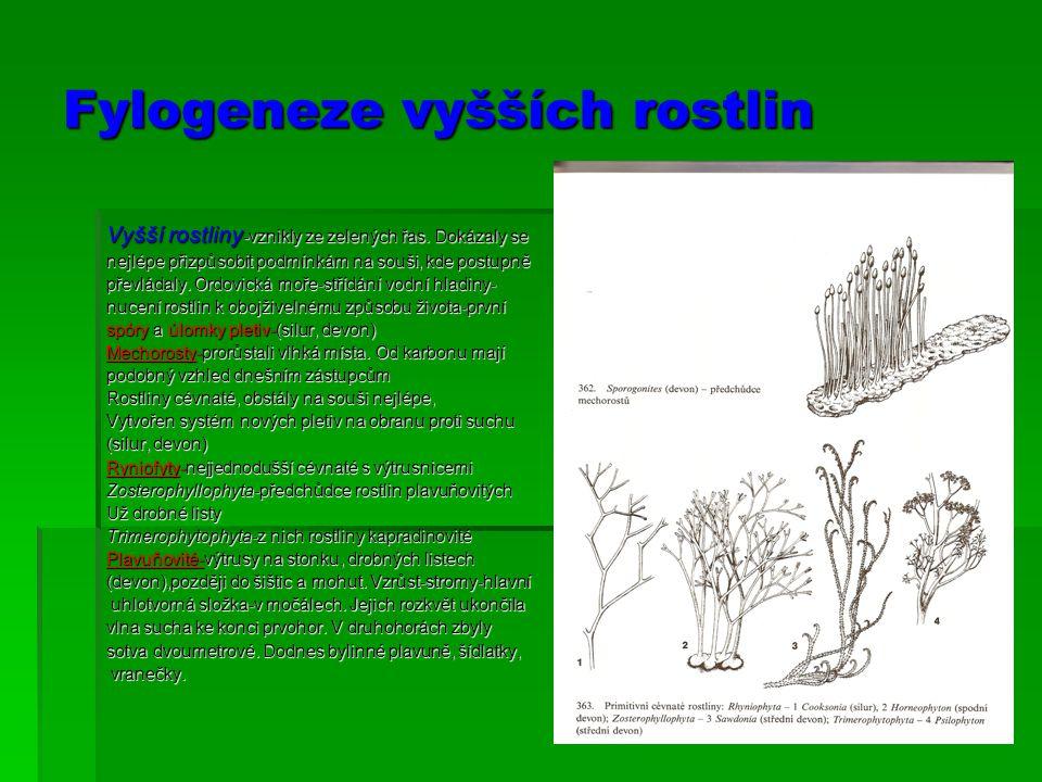 Fylogeneze vyšších rostlin