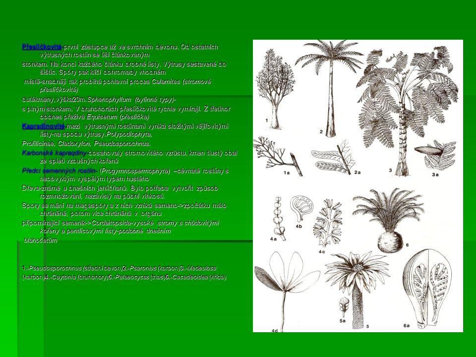 dutékmeny,výška20m.Sphenophyllum (bylinné typy)-