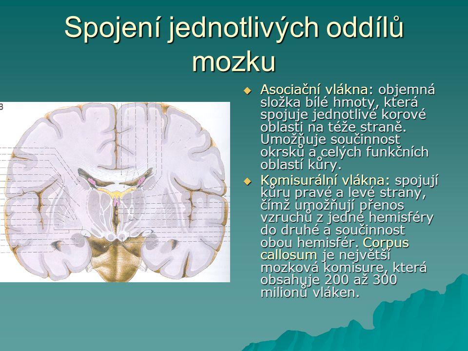 Spojení jednotlivých oddílů mozku