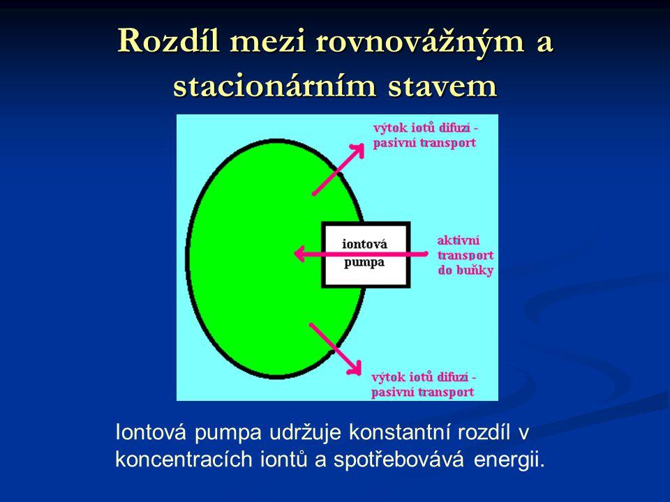 Rozdíl mezi rovnovážným a stacionárním stavem
