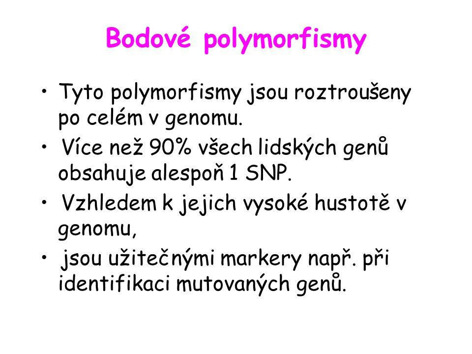 Bodové polymorfismy Tyto polymorfismy jsou roztroušeny po celém v genomu. • Více než 90% všech lidských genů obsahuje alespoň 1 SNP.